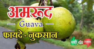 अमरुद के फायदे और नुक़सान – Benefits and harms of guava in hindi