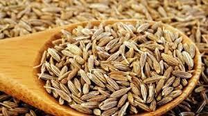 जीरा बीज हिंदी में – Caraway Seeds in Hindi