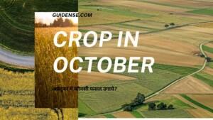 अक्टूबर में कौनसी फसल उगाये?(Crop in October) – बीज की अच्छी किस्म