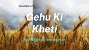 Gehu Ki Kheti