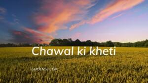 Chawal ki kheti