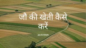 जौ की खेती कैसे करें – joo ki kheti