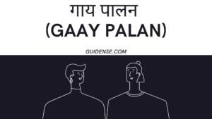 गाय पालन (Gaay palan) की शुरुआत कैसे करे ?