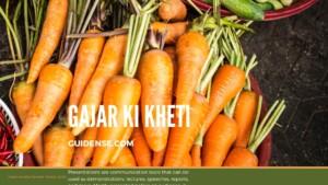 Gajar ki kheti – गाजर की खेती कैसे करें?