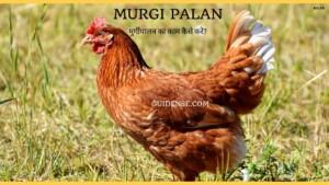 Murgi palan – मुर्गीपालन का काम कैसे करे?